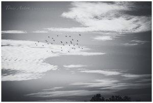 Linnuna tõusta taevasse